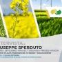 """L'ingegnere Giuseppe Sperduto, Master Energy Management: """"Consiglio questo percorso ogni volta che posso"""""""