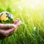 Master dopo scienze forestali e ambientali: quale percorso scegliere